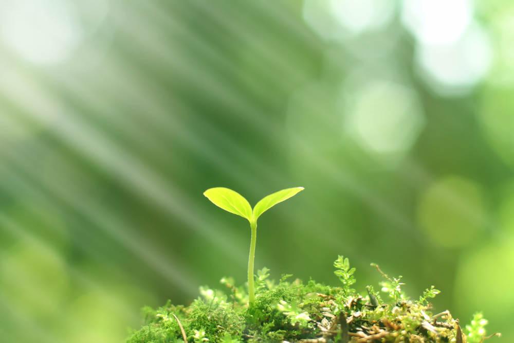 Green Construction Methods and Materials | Oak Hills Murphy Contractor